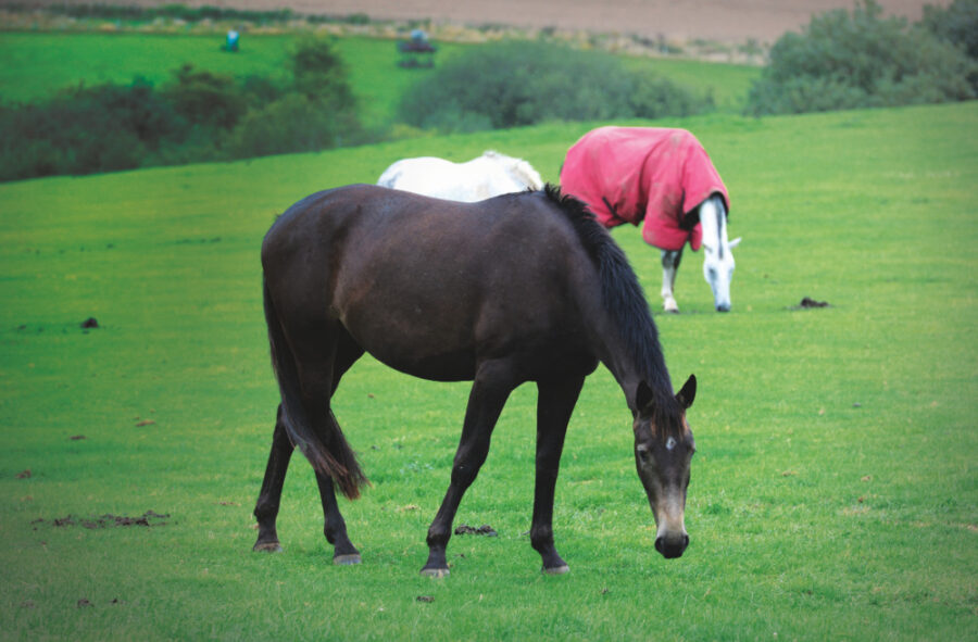 Vet Health Check: Has Your Horse Wintered Well?