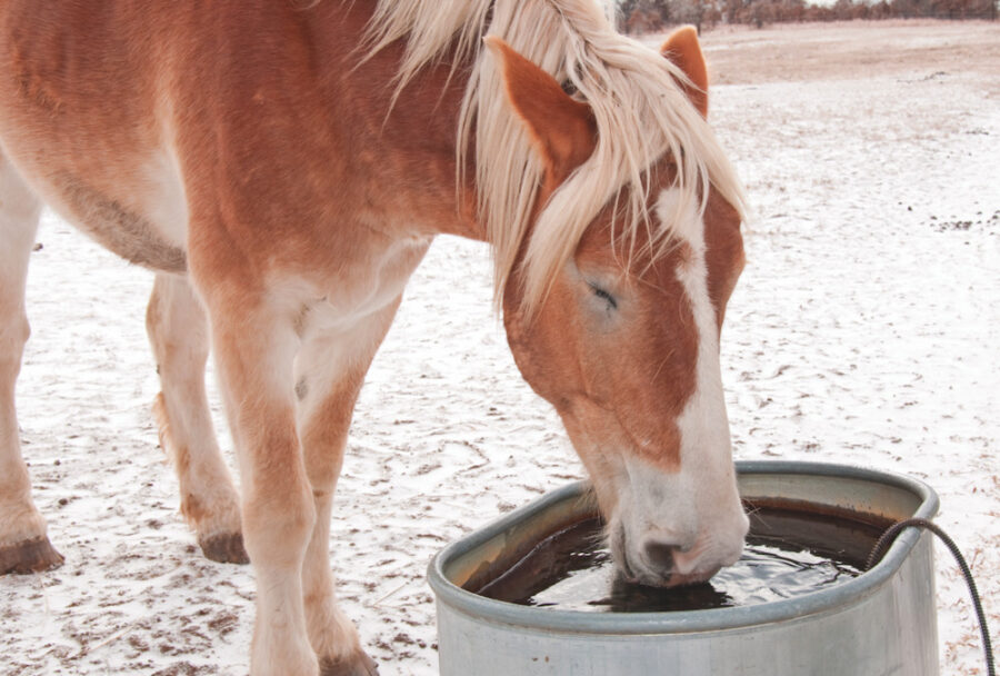 Vet: Why Dehydration Is a Winter Problem & 11 Ways to Prevent It