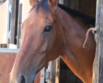 Feeding for Recovery, With Advice From Baileys