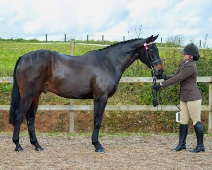 Perfect Tail Plaiting