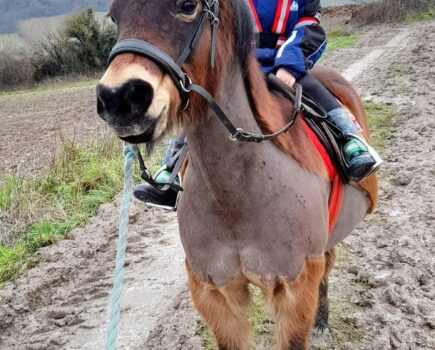 Toddler and Dartmoor Pony Tackling 100-mile Hacking Challenge