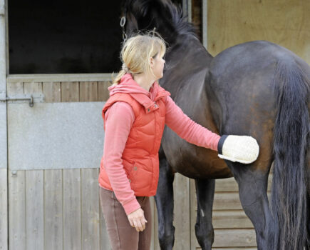 6 Tips to Make Your Horse's Coat Shine