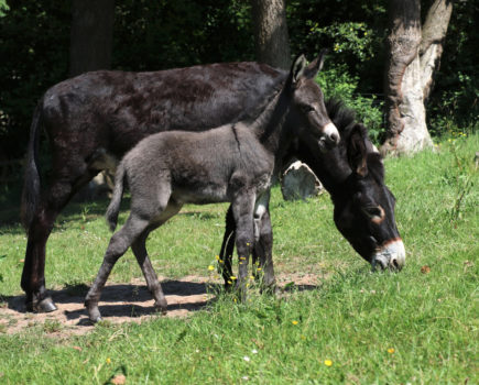 Quick-thinking groom helps deliver foal whose front leg became stuck during birth