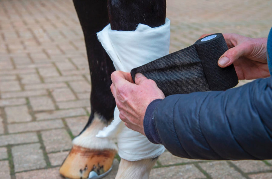 First Aid Week: Alan Davies' step-by-step picture guide to safely bandaging a wound