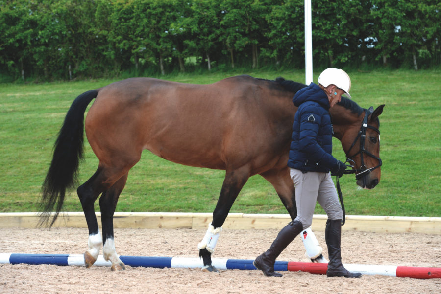 Andrew Hoy's groundwork exercises to improve your horse's balance, mobility and core strength