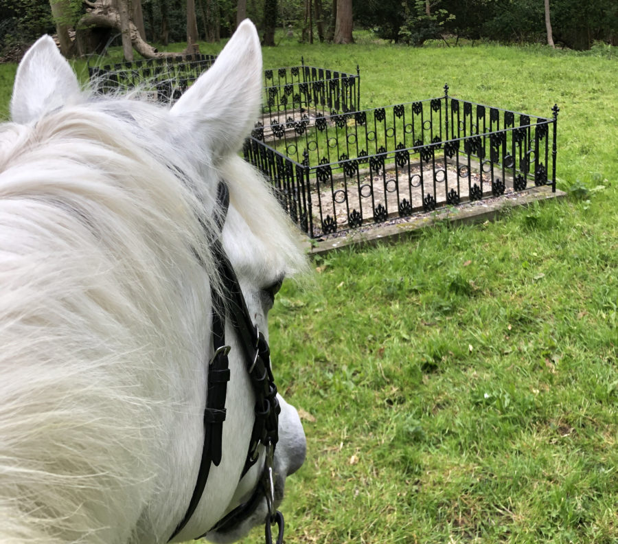 Anna's #Hack1000Miles diary: racehorse graves, spook-inducing pigeons and a baby who won't sleep