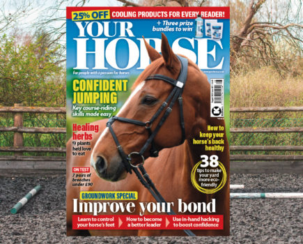 Inside the August issue of Your Horse: a groundwork and eco-friendly special