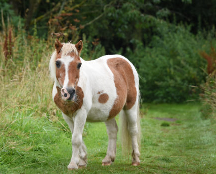 Pony aged 50 still going strong as he helps vet practice launch Golden Oldies Awareness Month