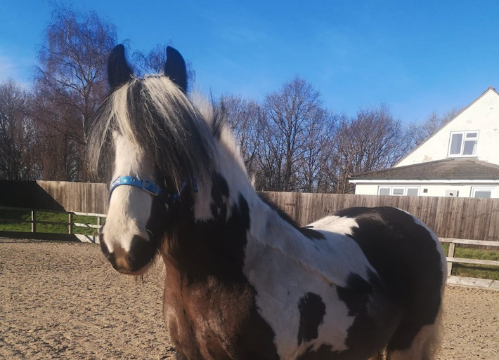 'Sweet mare' seeks forever home after over 500 days living with Blue Cross