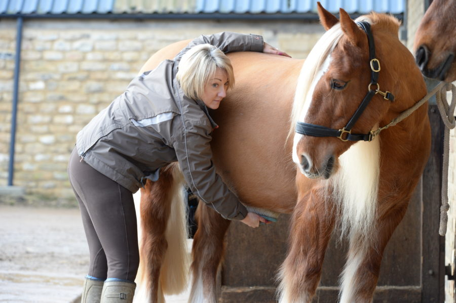 Study confirms that headcollars made from leather is safer option for your horse