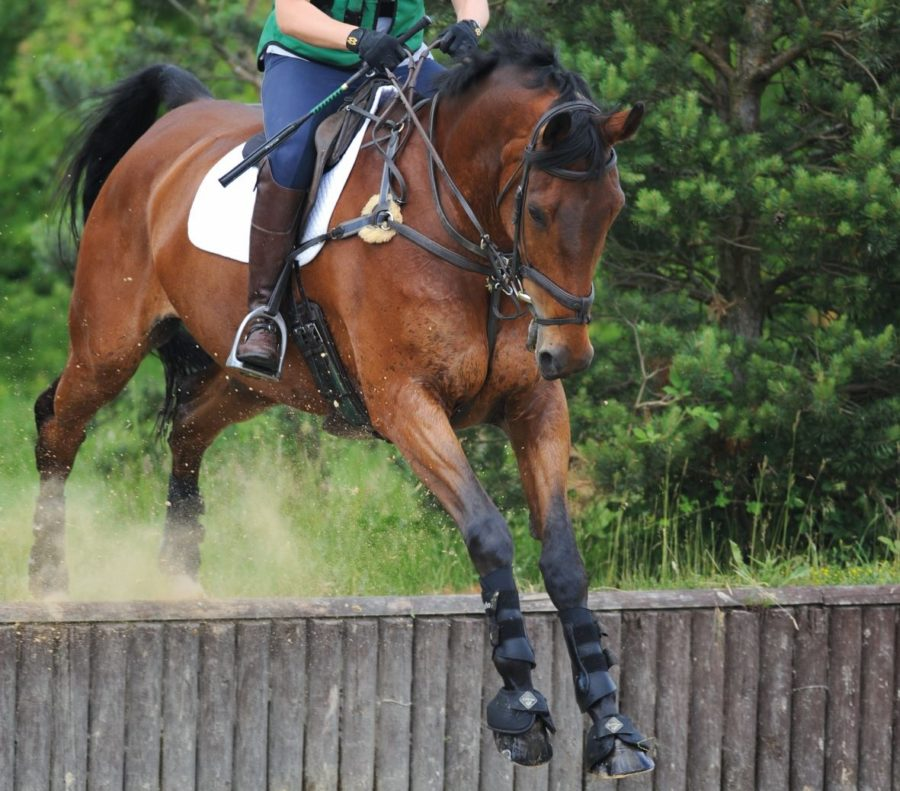Six breastplates currently on the market and where to buy one for your horse