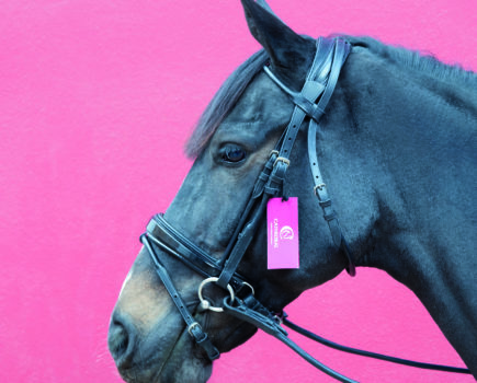 Win a bridle, high vis jacket, fly control bundle & Keep Well supplement