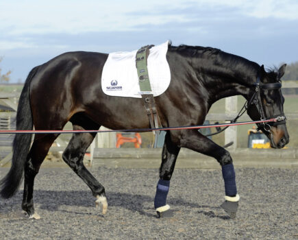 How Lungeing in a Chambon Can Develop Your Horse's Topline