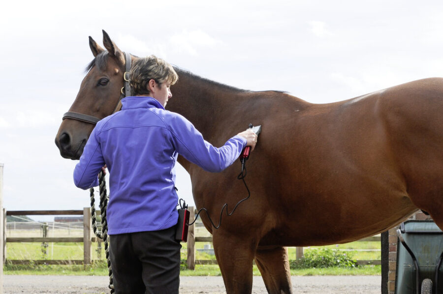 Clipping a Horse With Sensitive Skin
