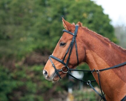 Need to Clip Your Horse? Read This First…