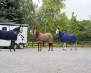 10 coolers to keep your horse comfortable after exercise or while travelling this autumn