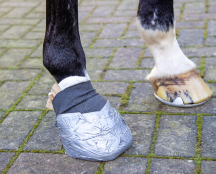 First Aid Week: How to poultice a hoof — Alan Davies' step-by-step guide