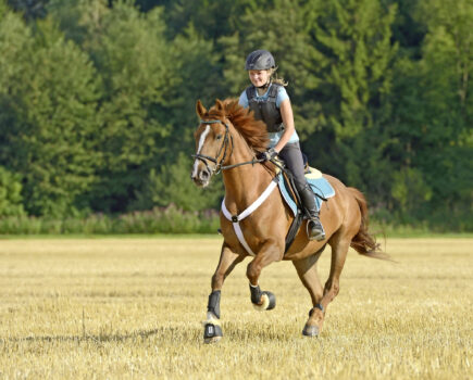 BETA Summer of Safety campaign to raise awareness of how products can keep horses and riders safe kicks off today