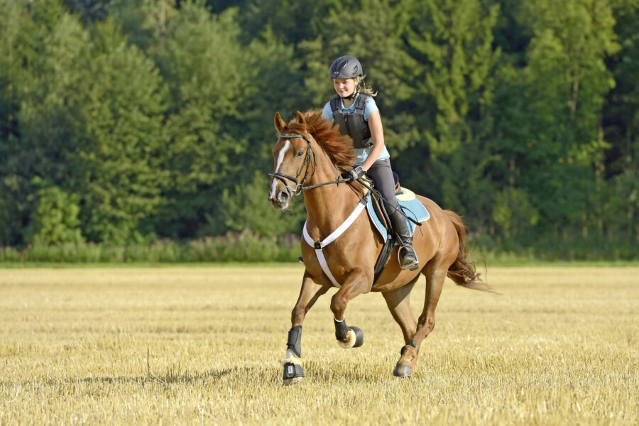Interval training: the health benefits, how to do it and why it's suitable for every size and breed of horse