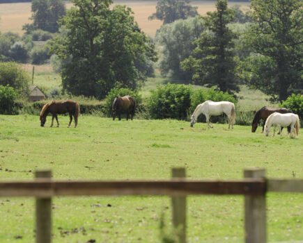 Feeding and colic: the link explained plus how to reduce the risk for your horse