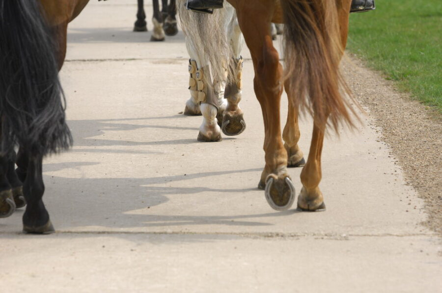 Dr David Marlin Explores Trotting on the Roads
