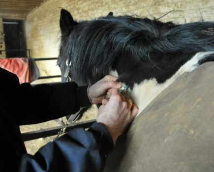 How to Help a Needle Shy Horse Overcome Their Phobia