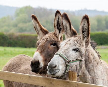 Brooke: Action for Working Horses and Donkeys