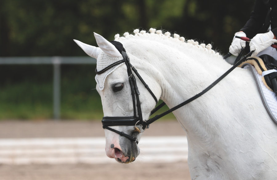 Five easy and effective ways to build and develop your horse's topline