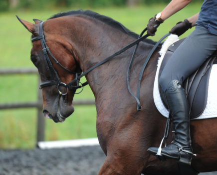 Improve your flatwork with Carl Hester's progressive dressage training plan