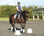 8 benefits of flatwork for every horse and rider, whether you compete or not