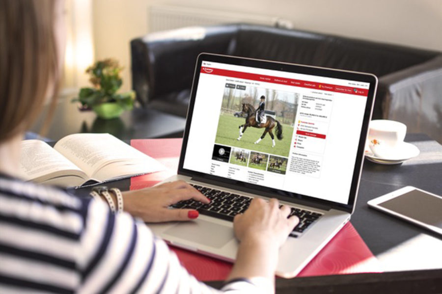 Europe's leading horses for sale platform launches in the UK
