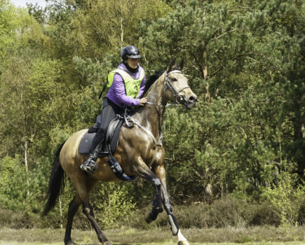 Win feed supplements plus an equine fitness tracker and branded saddlecloth