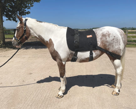 Engage the core muscles and develop strength: Your Horse reviews the Equiband