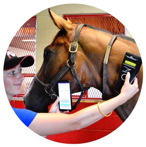 The future of horse management? Vets develop app for identification and medical monitoring of horses