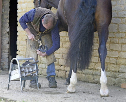 Easy Ways to Look After His Hooves