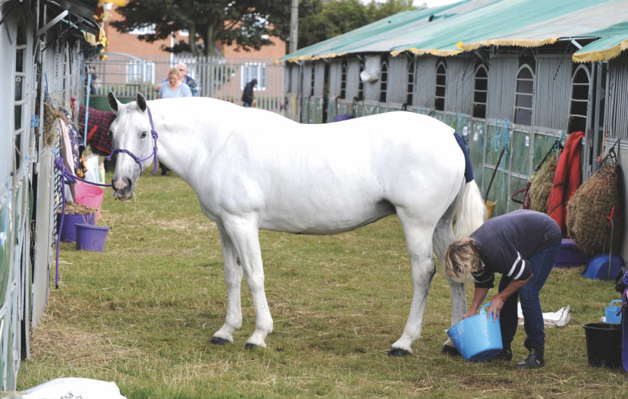 New equine Slimmers Club is launched to help combat the rising number of overweight horses and ponies