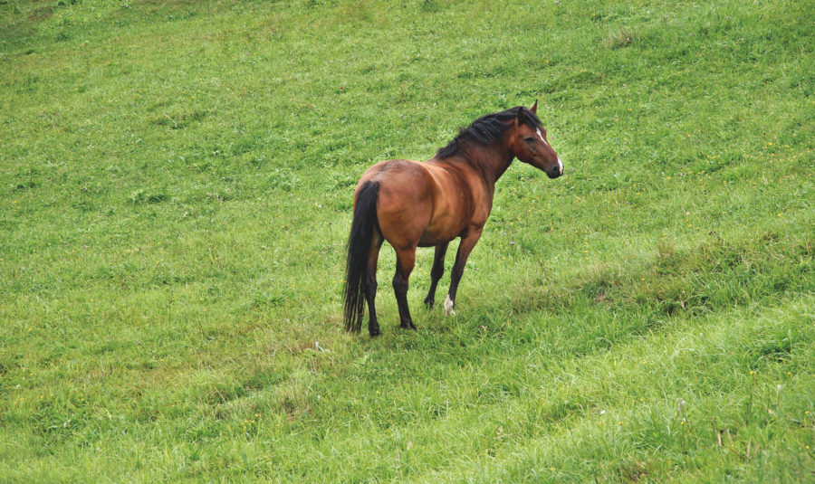 'Perceptions must change'; charity warns they are seeing a higher number of overweight horses