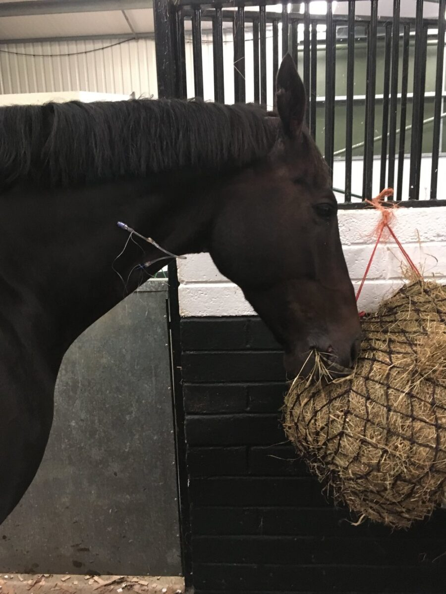 Using Laser Surgery to Treat a Horse's Sarcoids