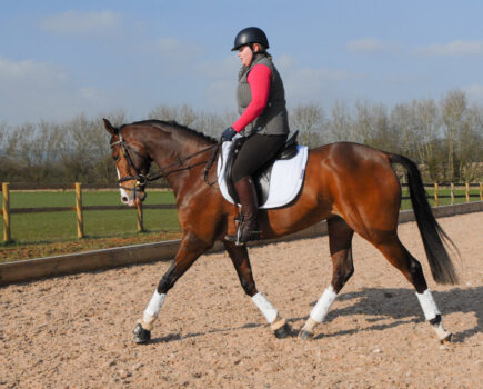 Watch: Develop Your Horse's Off the Floor Paces