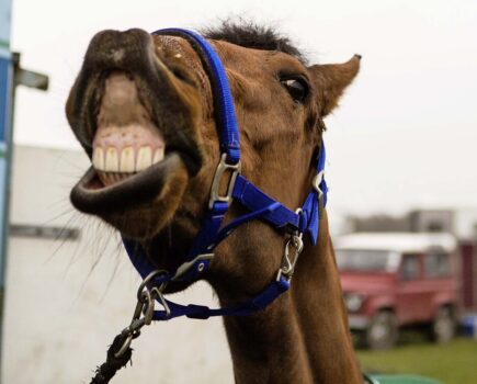 On the Nose (and Mouth) – Reading Your Horse's Expressions