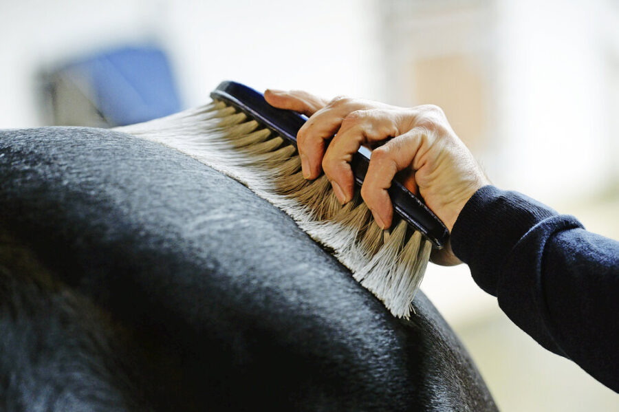 Best Grooming Tips and Tricks