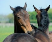 Fed up with flies? Your Horse puts eight fly sprays to the test