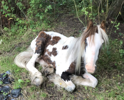 'Just in time': thin and malnourished pony found dumped and abandoned in Surrey field