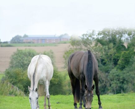 'He wasn't even turned out on grass': how one pony overcame life-threatening laminitis