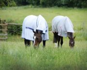 Buyer's guide to choosing a fly rug