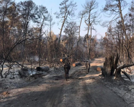 Horse sanctuary burned to the ground by wildfires urgently needs donations to help it rebuild