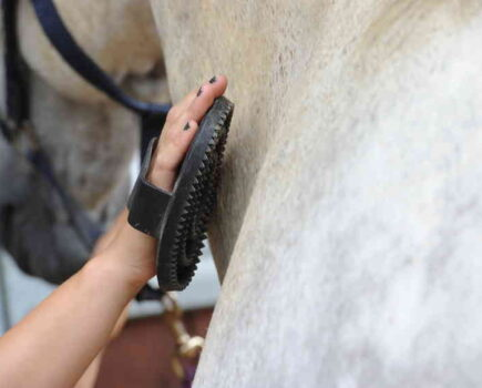 Groom the Mud Off Your Horse