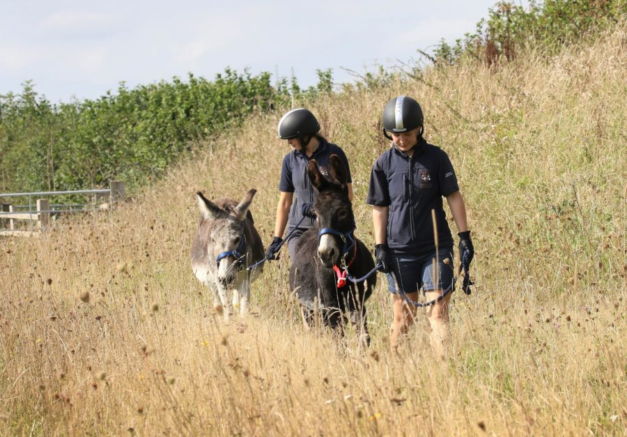 Donkeys play important role in Devon conservation scheme, encouraging the growth of wildflowers