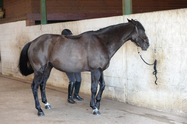 8 ways to help a mare in season — and why a little bit of sympathy can go a long way
