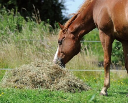 Tips to Keep Your Horse's Gut Healthy This Winter